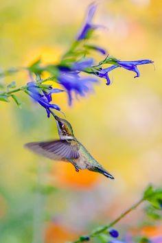 Hummingbirds always delight