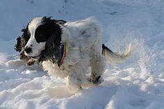 Wettrennen im Schnee