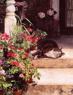 Lindas flores....e gato!