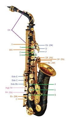 Saxophone fingering chart with illustrations, explanations and diagrams for each note. Easily learn the entire saxophone fingering system today! Saxophone Notes, Saxophone For Sale, Saxophone Sheet Music, Saxophone Players, Alto Saxophone Fingering Chart, Bagpipe Music, Music Chords, Tenor Sax, Kalimba
