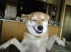Happy dog....!