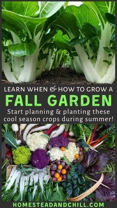 Gardening For Beginners, Gardening Tips, Urban Gardening, Dubai Miracle Garden, Magic Garden, Homestead Gardens, Vegetable Garden Design, Vegetable Gardening, Meteor Garden 2018