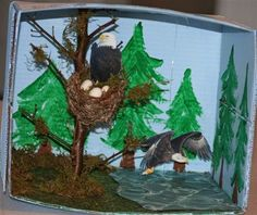 Bald Eagle Habitat Dioramas | ... diorama will be to look at here are some examples of dioramas students
