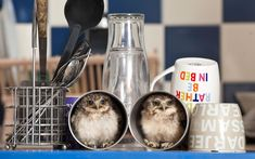 """Two orphaned baby burrowing owls, nicknamed Linford and Christie, have moved into the home of their keeper Jimmy Robinson. The owlets were hatched in an incubator at Longleat Safari Park, Wiltshire, and are now being hand-reared by Jimmy. The native American birds, which get their name from living in small burrows in the wild, can find plenty of nooks and crannys about his flat to hide. """"Tea cups and bookcases are a particular favourite,"""" says Jimmy, """"but it's good to see them developing…"""