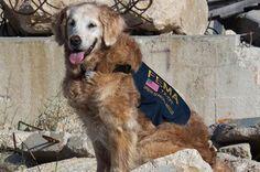 Last 9/11 Ground Zero Search Dog Passes Away in Texas