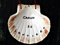 Pilgrims on the Camino de Santiago de Compostella carry these shells on their backpacks. It is the symbol of the Camino.