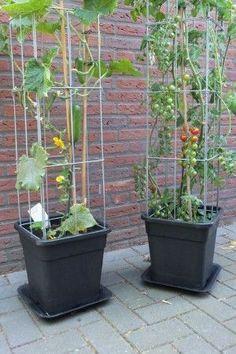 Garden Plants Vegetable, Small Vegetable Gardens, Vegetable Garden For Beginners, Container Gardening Vegetables, Gardening For Beginners, Small Gardens, Vegetables Garden, Growing Vegetables In Pots, Veggie Gardens