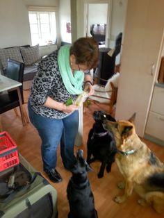 Mit hundeliv med Vaks.: Feriegaver / Gifts