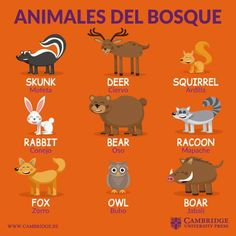 Spanish Grammar, Spanish Vocabulary, Spanish Language Learning, Spanish Teacher, English Time, English Study, Learn English, Spanish Notes, Spanish Basics