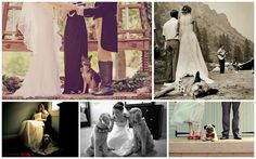 Doggie Do? | Engaged & Inspired