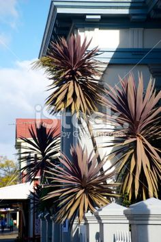 Art Deco Building Facade and Cabbage Tree, New Zealand Royalty Free Stock Photo New Zealand Landscape, Tree Images, Art Deco Buildings, Building Facade, Image Now, Palms, Ferns, Small Towns, Cabbage