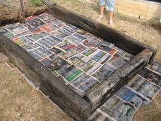 Building a raised bed, lasagna style-- no hardware cloth on the bottom, just water-soaked newspapers to prevent grass from intruding; compost ingredients get layered over this