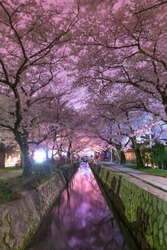 Tetsugaku no Michi (Philosopher's Walk) Kyoto