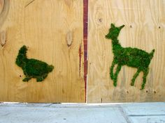 Moss Graffiti    Moss + a beer+sugar   then blend and paint on a wall or board. make sure it stays moist.