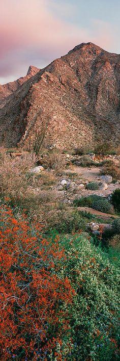 Anza Borrego Desert State Park, Borrego Springs, California, USA