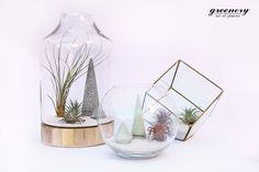Which one of these air plant terrariums is perfect for you?