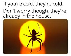 You're Cold, they're cold. Don't worry, though, they're already in your house. Spiders And Snakes, Don't Worry, Funny Posts, I Laughed, Funny Animals, Sick, Cold, Humor, Memes
