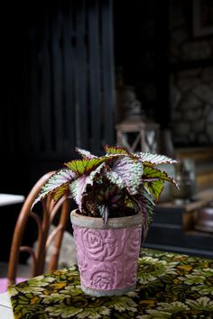 5 Overlooked Plants That Can Survive In The (Almost) Dark