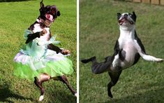 """12 Dogs Who Took The Phrase """" Dance Like No One's Watching"""" Way Too Literally"""