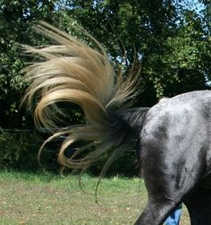 ♞Pinterest ➝ LimitlessSkyy♘ Horse Hair, Beautiful Horses, Garden Sculpture, Outdoor Decor, Animals, Pretty Horses, Animales, Animaux, Animal Memes