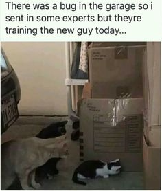 20 Animal Memes That Are Funny - World's largest collection of cat memes and other animals Funny Animal Photos, Funny Animal Memes, Cute Funny Animals, Cat Memes, Funny Cute, Cute Cats, Funny Pictures, Funny Memes, Hilarious