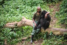 This heart-melting image shows a Park Ranger silently comforting a gorilla. The gorilla just lost its mother to illegal poachers. The Ranger appears to be as upset as the gorilla. These Park Ranger… Primates, Beautiful Creatures, Animals Beautiful, Animals And Pets, Cute Animals, Wild Animals, Mountain Gorilla, Mundo Animal, Parcs