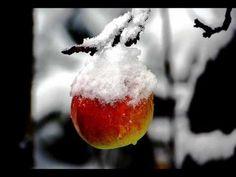 Winterfreude Es schneit es schneit, es wurde höchste Zeit