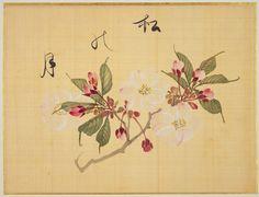 La sakura (flor del cerezo), cuya belleza ha sido inspiración de los artistas japoneses por mucho tiempo, es la flor más famosa de Japón. Creado a mediados del siglo XIX, Ōka-fu (Un libro de bocetos de las flores del cerezo) tiene los nombres e ilustraciones de 29 variedades de sakura, pintadas sobre seda con delicadas pinceladas. El artista, Sakamoto Kōnen (1800-1853), estudió medicina herbaria con su padre, Sakamoto Jun'an, médico ordinario del señor soberano del dominio de Kishū (actual…