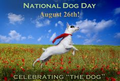 August 26th is National Dog Day, Dog, Cat and other Pet Friendly Travel Articles