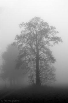 trees - null
