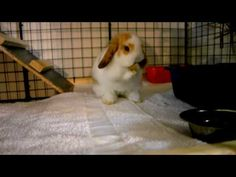How to Build a Rabbit Hutch - Cheap and Easy - YouTube