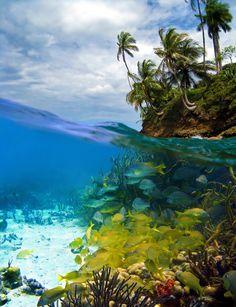 Underwater view snorkelling in tropical Panama