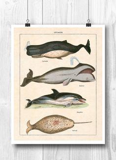Nautical art Marine mammals print decorative arts by PrintCorner