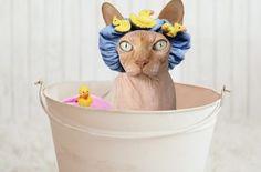 Queres saber porque os gatos têm medo de água?