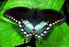 Rare Butterfly Species | Leave a Reply Cancel reply
