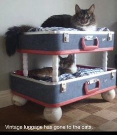 Cat bed. Found this on Facebook/Dusty Old Things page. Cute idea!!!