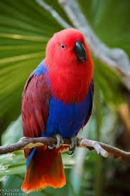 Image result for exotic birds