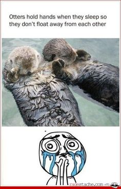 Otters hold hands when they sleep so they don't float away from each other awwnnn