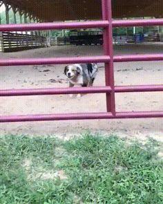 This dog will slip through any hole
