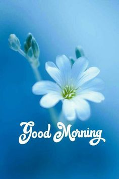 Good Morning Friends Images, Good Morning Beautiful Pictures, Good Morning Images Flowers, Good Morning Beautiful Images, Good Morning Images Download, Good Morning Picture, Good Morning Messages, Good Morning Greetings, Morning Pictures