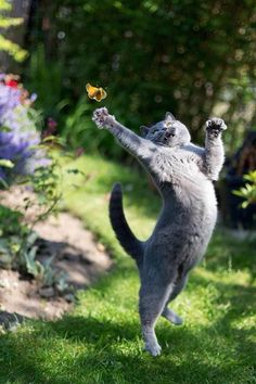 This would be a cute idea for painting in a nursery. Little cartoon kitties in various poses with a butterfly