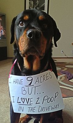 """I have 9 ACRES... but I LOVE to poop in the driveway."" ~ Dog Shaming shame - Rottweiler  - So it is easier to find, you wouldn't want to step in it!"