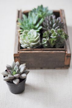 Love this little planter. I think Phil should build it for me :) DIY: Simple Succulents via Project Wedding
