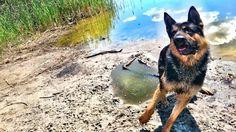 Dog Corgi, Photos, Animals, Corgis, Pictures, Animales, Animaux, Animal, Animais