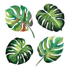 Watercolor leaves design Free Vector