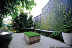 This small but hardy inner city courtyard garden design manages to be both inviting and private.