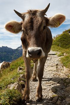 Watcha looking at? by sandrotto, via Flickr