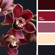 beige, burgundy, colour of asphalt, colour of burgundy orchids, colour of cherry, colour of cherry flesh, colour of eggplant, colour of wet asphalt, colour solution for interior design, combination of colours for interior decor, cream, dark gray, graphite gray, reddish-violet colour, rich pink.