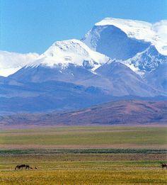 Mt Gurla Mandhata and wild Donkeys, Nagari (Tibet). Between Tibetan Wild Ass (Kiang) and the peak are some 60km. Mt Gurla Mandhata 7694m,Tibetan name Naimona'nyi.     Courtesy: Jan Reurink (Netherlands).