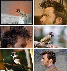 David Tennant bird... they both have such great hair!!